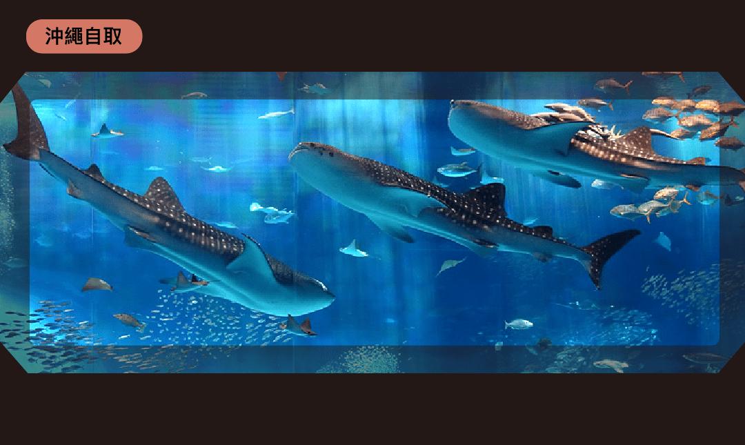 沖繩美麗海水族館 | 沖繩取票-市場最低價|成人票