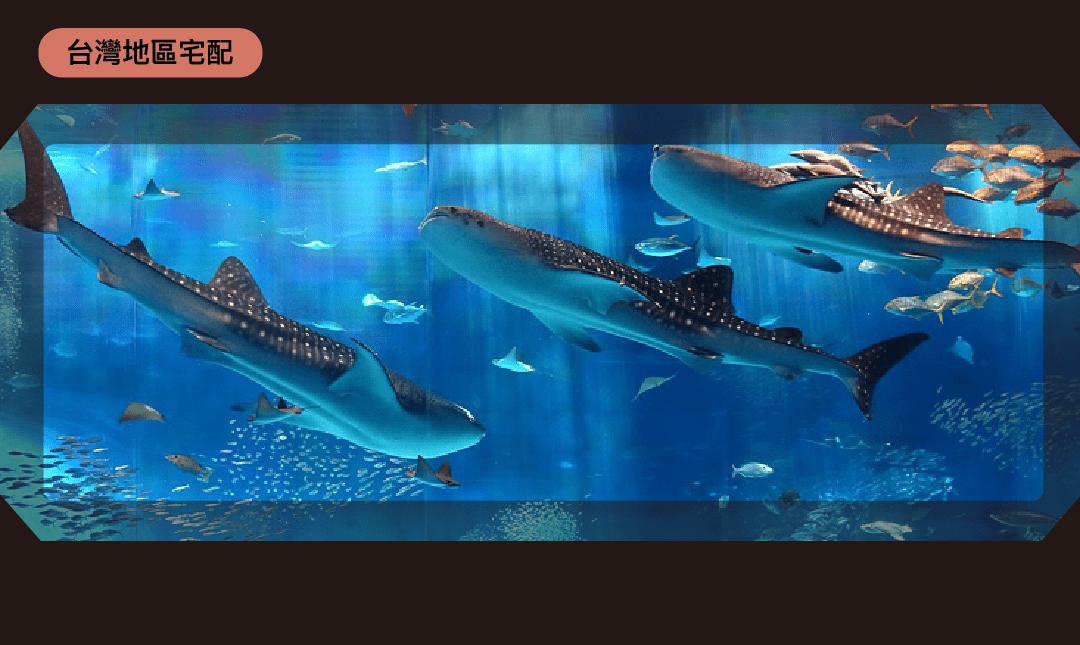 美麗海水族館 | 台灣寄送-市場最低價|成人票